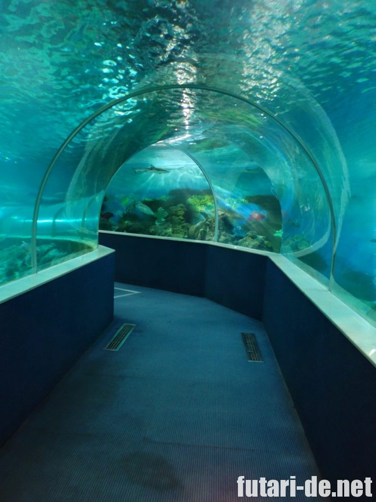 ベトナム フーコック ビンパールランド 水族館