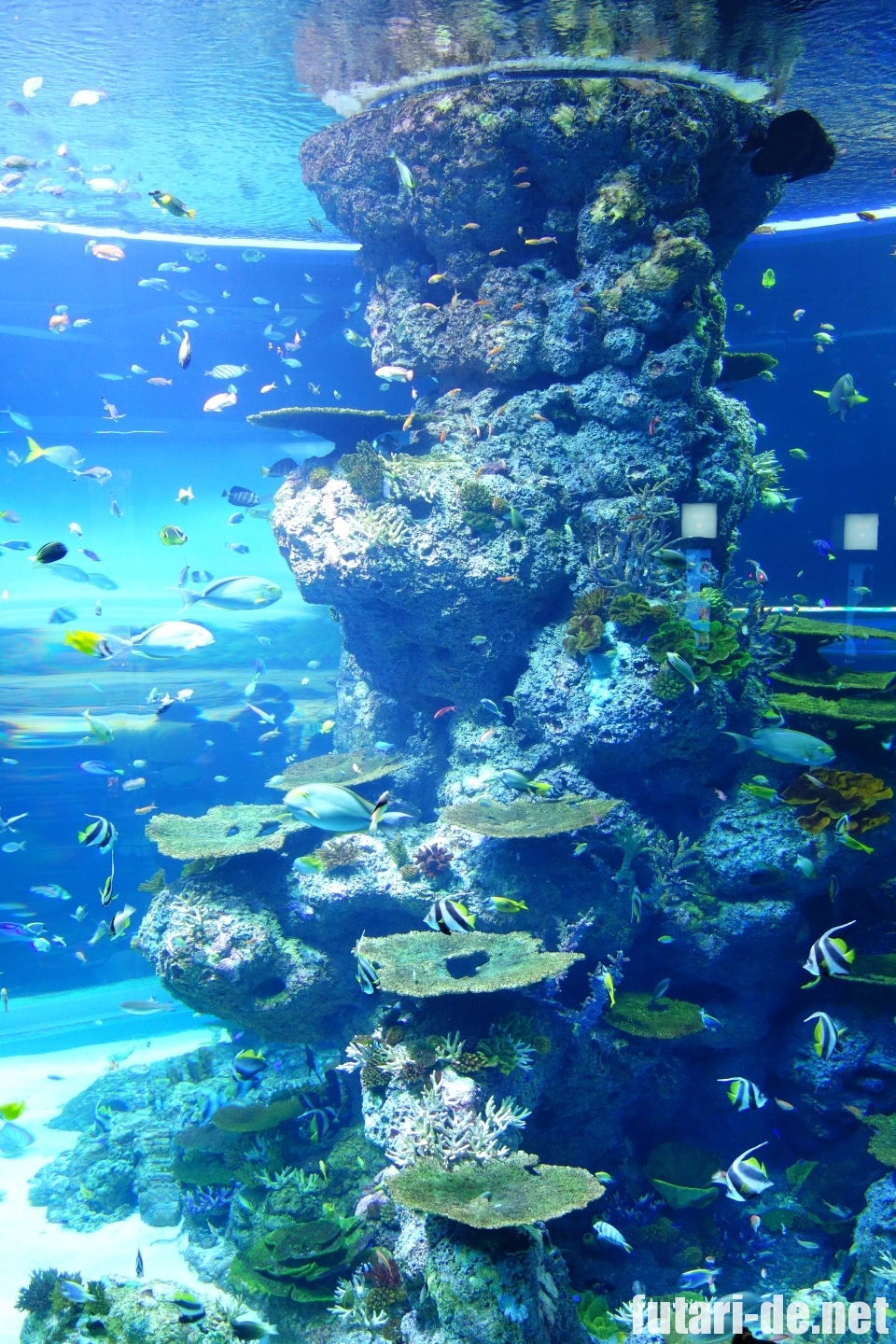 シンガポール 水族館