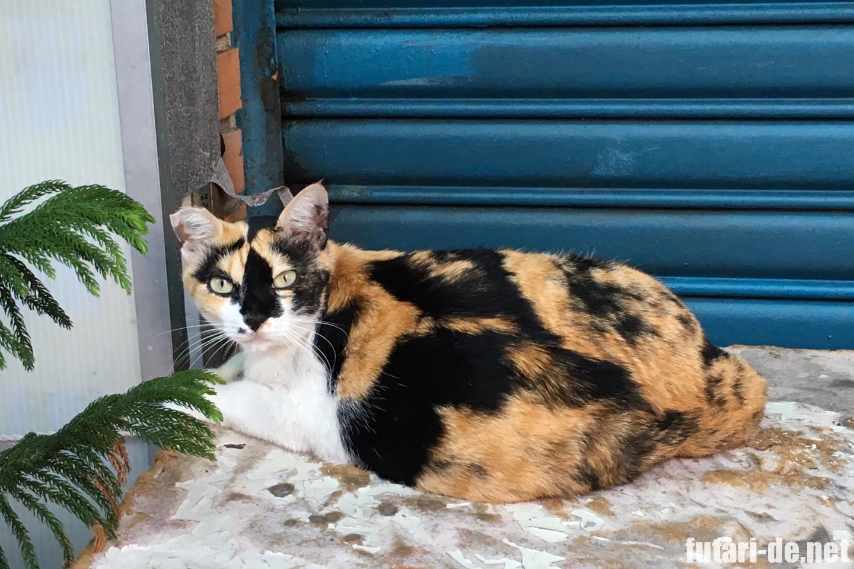 台湾 台北 野良猫 三毛猫