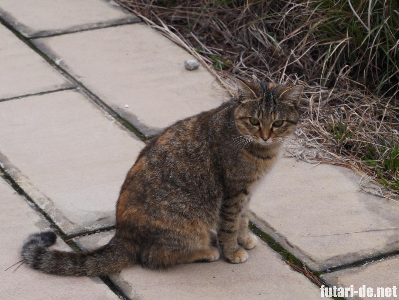 長崎県 雲仙 雲仙地獄 猫