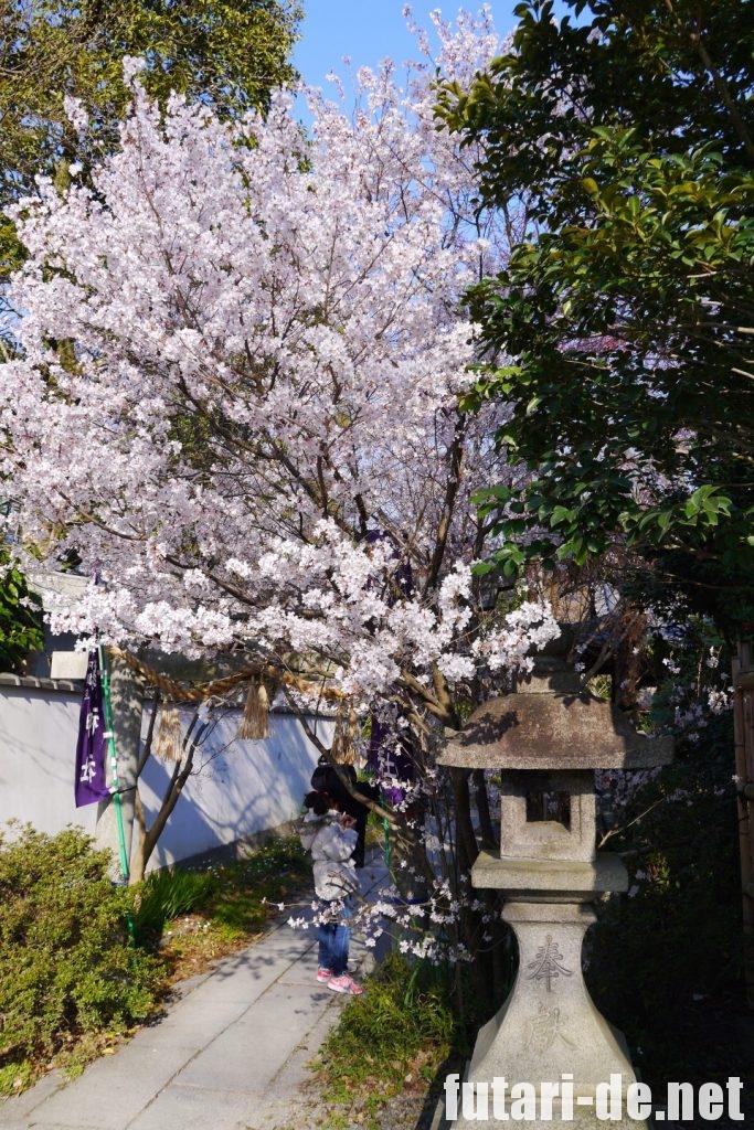 京都府 京都 京都御苑 宗像神社 桜
