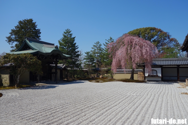京都府 京都 高台寺 勅使門 方丈前庭 桜 波心庭