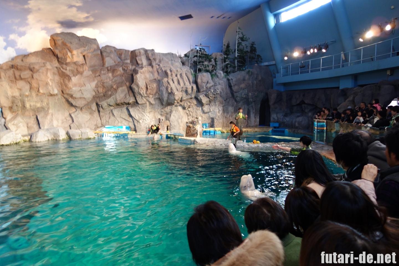 愛知県 名古屋市 名古屋港水族館 ベルーガ公開トレーニング