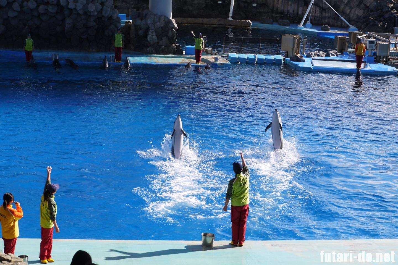 愛知県 名古屋市 名古屋港水族館 イルカパフォーマンス