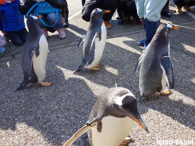 愛知県 名古屋市 名古屋港水族館 ペンギン よちよちウォーク
