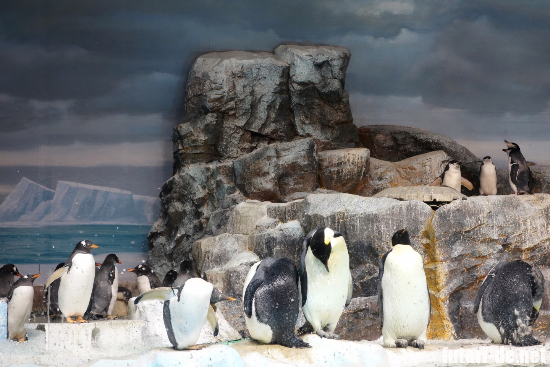 愛知県 名古屋市 名古屋港水族館 ペンギン