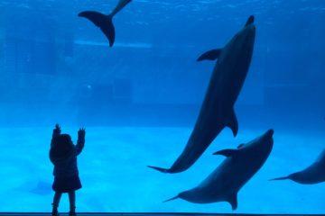 愛知県 名古屋市 名古屋港水族館 イルカ 巨大水槽