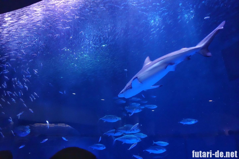 愛知県 名古屋市 名古屋港水族館 マイワシ 黒潮大水槽 トルネード