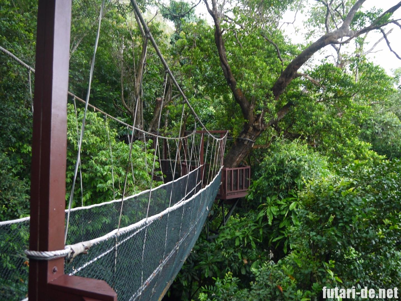 マレーシア コタキナバル シャングリララサリア 自然保護区 キャノピーウォーク