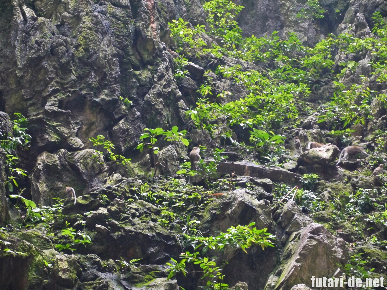 マレーシア バトゥ洞窟 バトゥケイブ 猿