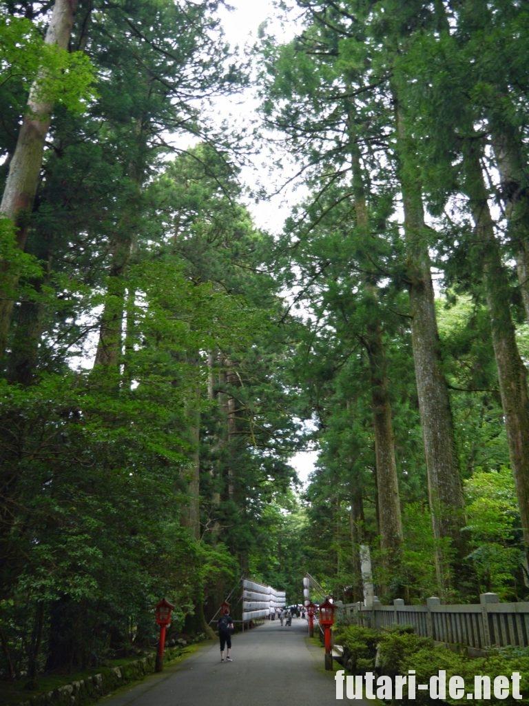 箱根 箱根神社 参道 杉並木