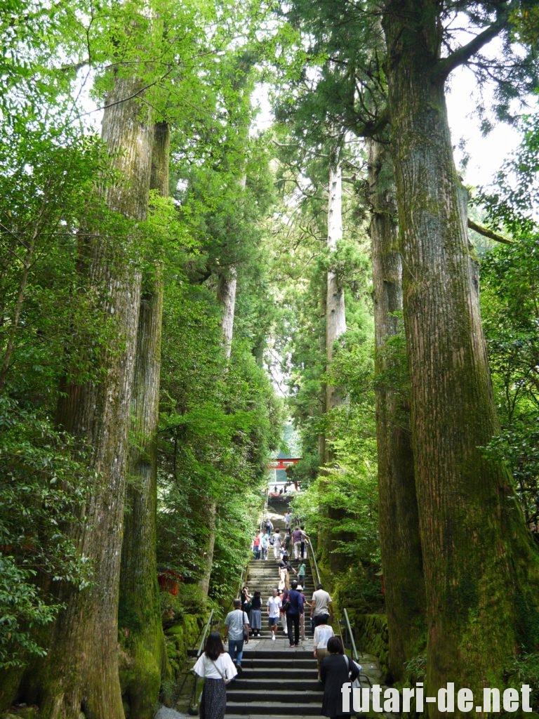 箱根 箱根神社 参道 石段 杉並木