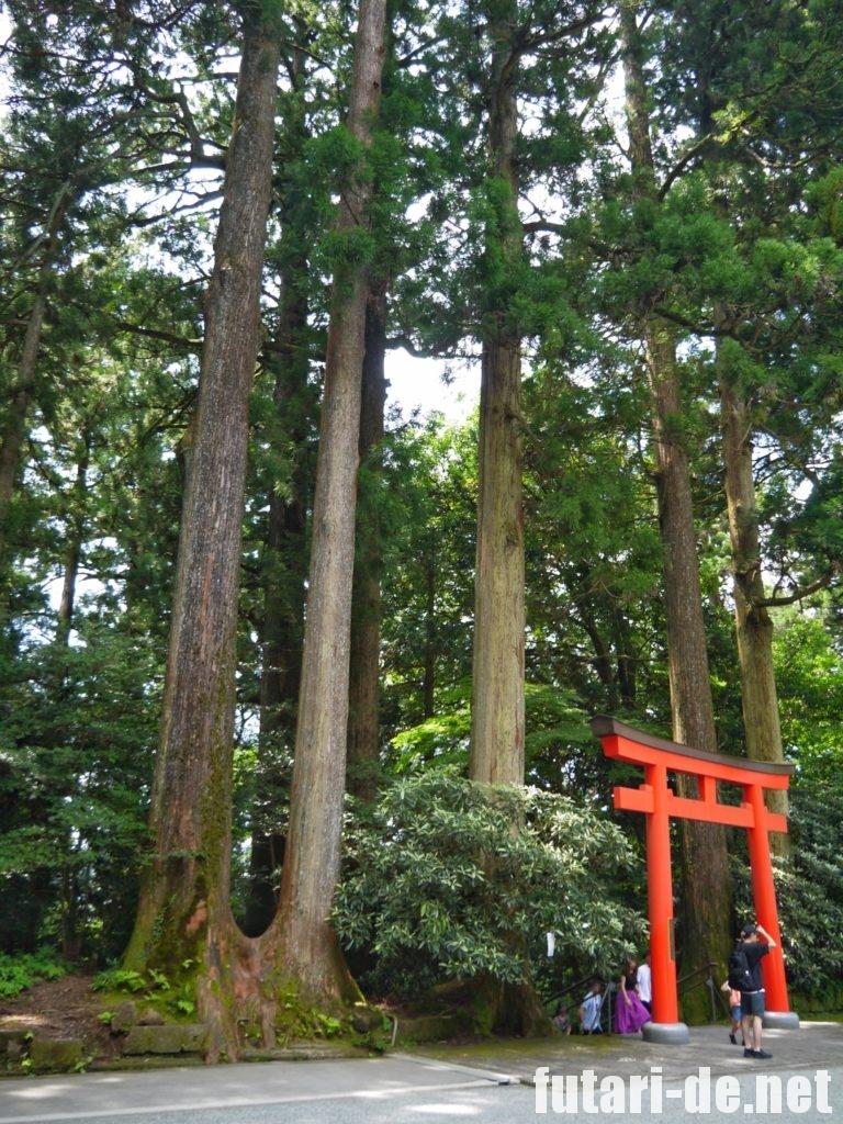 箱根 箱根神社 第五鳥居
